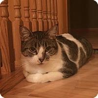 Adopt A Pet :: Kia - Princeton, MN