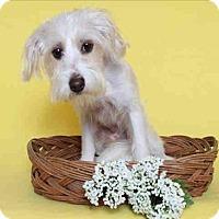 Adopt A Pet :: Daniel - Encino, CA