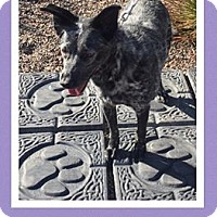Adopt A Pet :: Kir - Scottsdale, AZ