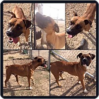 Adopt A Pet :: Champ - Garber, OK