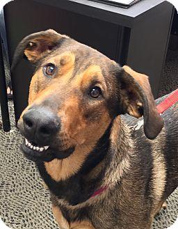 Dog Training Schertz Tx