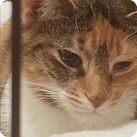 Adopt A Pet :: Martina - Griffin, GA