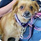 Adopt A Pet :: Jambalaya