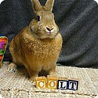 Adopt A Pet :: Colt - Newport, DE