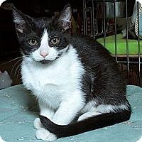 Adopt A Pet :: Andi - Sacramento, CA