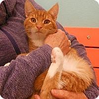 Adopt A Pet :: Kaleb - Reston, VA