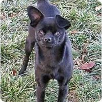 Adopt A Pet :: Onyx - Meridian, ID