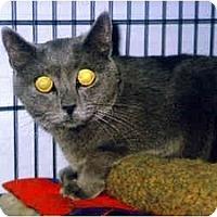 Adopt A Pet :: Apollo - Medway, MA