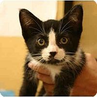 Adopt A Pet :: Marigold - Jenkintown, PA
