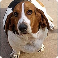 Adopt A Pet :: Addy - Phoenix, AZ