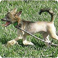 Adopt A Pet :: Tatum - Meridian, ID