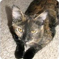 Adopt A Pet :: Tina - Xenia, OH