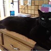 Adopt A Pet :: Kenyon - Byron Center, MI