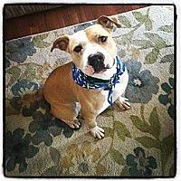 Adopt A Pet :: Opie - Acushnet, MA