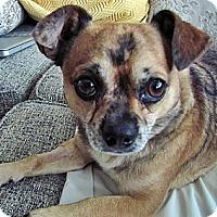 Adopt A Pet :: Yoda - Toronto, ON