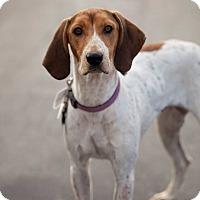 Adopt A Pet :: Ruby - La Crosse, WI
