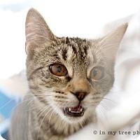 Adopt A Pet :: Agnes - Island Park, NY
