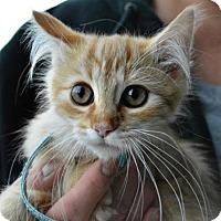 Adopt A Pet :: Kitty 2 - Temecula, CA