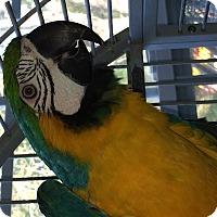 Adopt A Pet :: Bunny - Punta Gorda, FL