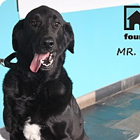 Adopt A Pet :: Mr. Oz (Ozzie) - Chicago, IL