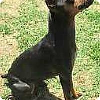 Adopt A Pet :: Joty - Sacramento, CA