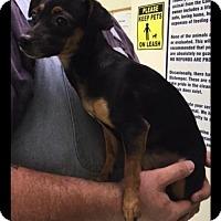 Adopt A Pet :: Rhonda Lee - Harrisburg, PA
