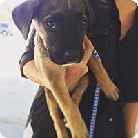 Adopt A Pet :: Monday - Los Angeles, CA