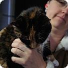 Adopt A Pet :: Terri* - Henderson, NC