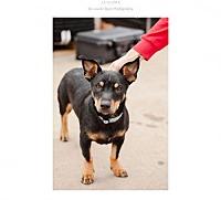 Adopt A Pet :: tank - Edmond, OK
