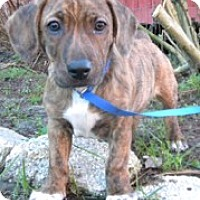 Adopt A Pet :: cooper - SOUTHINGTON, CT