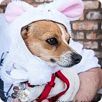 Adopt A Pet :: Skippy - San Marcos, CA