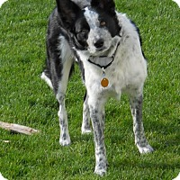 Adopt A Pet :: Brie - Evansville, IN