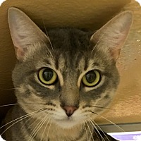 Adopt A Pet :: Julio - Houston, TX