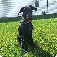 Adopt A Pet :: O'Malley - Breese, IL