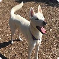 Adopt A Pet :: SATURN - Urbana, IL