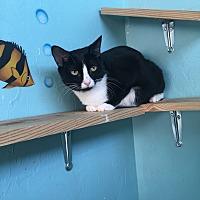 Adopt A Pet :: Olive - Woodward, OK
