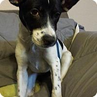 Adopt A Pet :: Joy - Olympia, WA