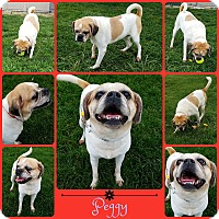 Adopt A Pet :: Peggy - Joliet, IL