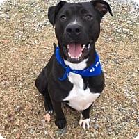 Adopt A Pet :: Phillip - Greensboro, NC
