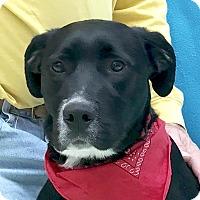 Adopt A Pet :: Bronx - Evansville, IN