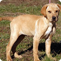 Adopt A Pet :: Parcell - Maynardville, TN