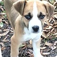Adopt A Pet :: Shawnee#3F - Orlando, FL