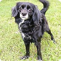 Adopt A Pet :: Diva - Mocksville, NC