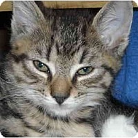 Adopt A Pet :: Bobbie - Riverside, RI