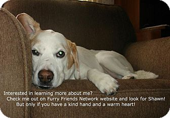 Spaniel (Unknown Type)/Beagle Mix Dog for adoption in Boiling Springs, Pennsylvania - Shawn