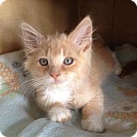 Adopt A Pet :: Jeffie - Island Park, NY