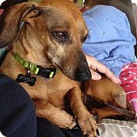 Adopt A Pet :: Norman - Humble, TX
