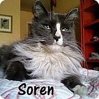 Adopt A Pet :: Soren - Simi Valley, CA