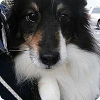 Adopt A Pet :: Rosabella - Gainesville, FL