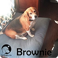 Adopt A Pet :: Brownie - Pittsburgh, PA